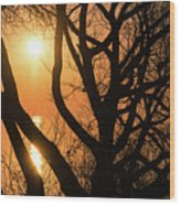 Gorgeous Morning Through The Tree Screen Wood Print