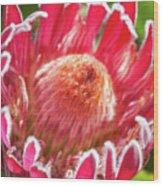 Gorgeous Pink Protea Bloom  Wood Print