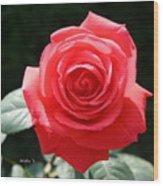 Gorgeous Rose Wood Print