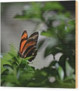 Gorgeous View Of An Oak Tiger Butterfly In The Spring Wood Print
