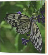 Gorgeous White Tree Nymph Butterfly With It's Wings Spread Wood Print