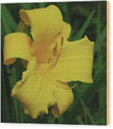 Gorgeous Yellow Daylily In A Garden Blooming Wood Print