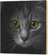 Gorgeous Yellow-green Eyes Cat Wood Print