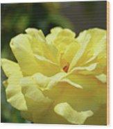 Gorgeous Yellow Rose Wood Print