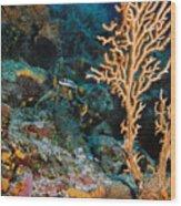 Gorgonian Wood Print