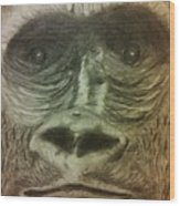 Gorilla In The Zoo Wood Print