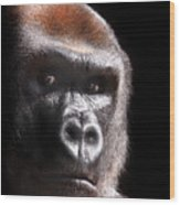 Gorilla ... Kouillou Wood Print
