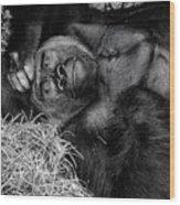 Gorilla Pose Wood Print