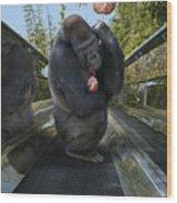 Gorilla With Lollipop Wood Print