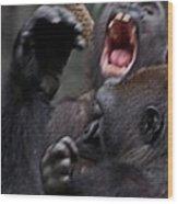 Gorillas Fighting Wood Print