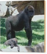 Gorillas Mary Joe Baby And Emonty Mother 6 Wood Print