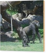 Gorillas Mary Joe Baby And Emonty Mother 7 Wood Print