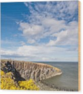 Gorse At Cullernose Point Wood Print