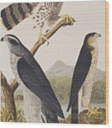 Goshawk And Stanley Hawk Wood Print