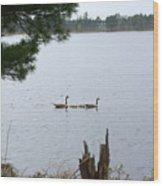 Goslings And Geese Wood Print