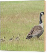 Goslings Following Mama Wood Print