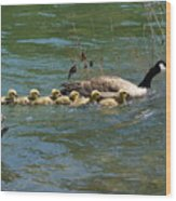 Goslings In A Row Wood Print