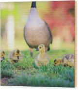 Goslings In The Park Wood Print