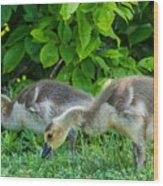 Goslings Wood Print