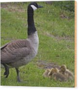 Goslings With Mother Goose Wood Print