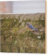 Governor's Palace Bluebird Wood Print