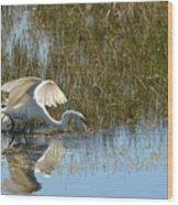 Graceful Great Egret Wood Print