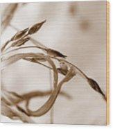 Graceful Wood Print