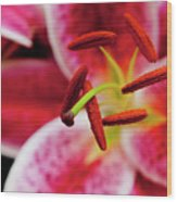 Graceful Lily Series 21 Wood Print