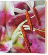 Graceful Lily Series 23 Wood Print