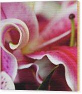 Graceful Lily Series 25 Wood Print