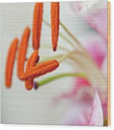 Graceful Lily Series 28 Wood Print