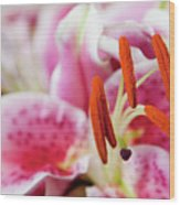 Graceful Lily Series 29 Wood Print