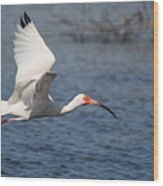 Graceful Spirit By Darrell Hutto Wood Print
