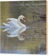 Graceful Swan I Wood Print