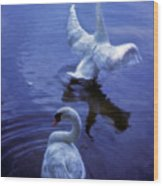Graceful Swans Wood Print