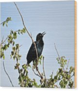 Grackle Cackle Wood Print