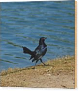 Grackle On The Move Wood Print