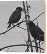 Grackles On Branches  Wood Print