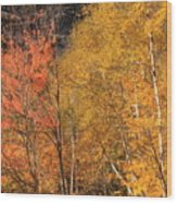 Grafton Notch Foliage Wood Print