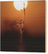Grain In Silhouette Wood Print
