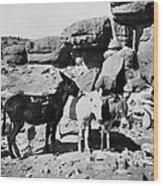Grand Canyon: Donkeys Wood Print