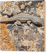 Grand Canyon Lizard Wood Print