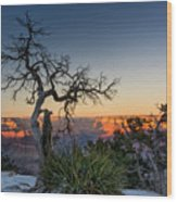 Grand Canyon Lone Tree At Sunset Wood Print