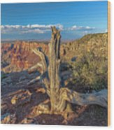 Grand Canyon Old Tree Wood Print