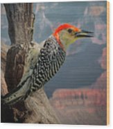 Grand Canyon Woodpecker Wood Print
