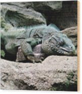 Grand Cayman Blue Iguana Wood Print