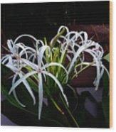 Grand Crinum Lily Wood Print