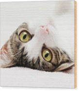 Grand Kitty Cuteness Wood Print by Andee Design