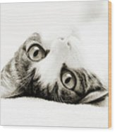 Grand Kitty Cuteness Bw Wood Print by Andee Design