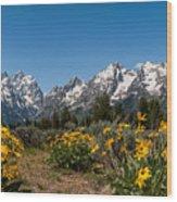 Grand Teton Arrow Leaf Balsamroot Wood Print by Brian Harig